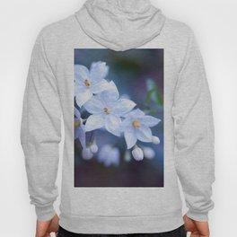 Jasmine Nightshade Flowers #3 #floral #art #society6 Hoody