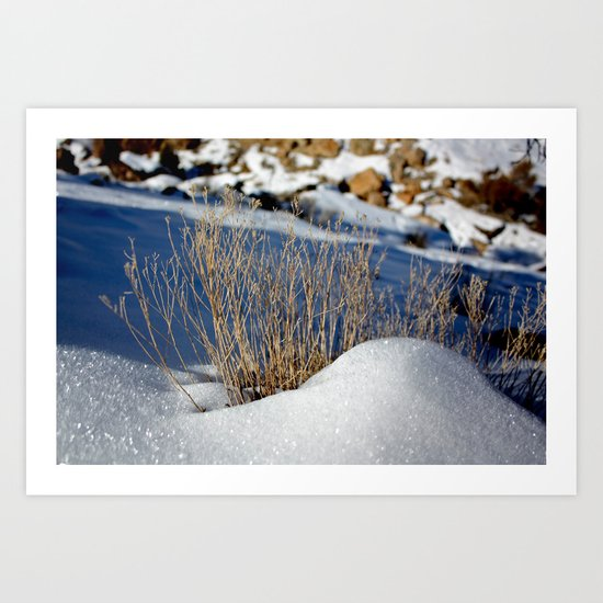 January Chill Art Print
