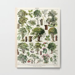 Adolphe Millot - Arbres A - French vintage botanical poster Metal Print