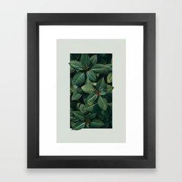 Growth III Framed Art Print