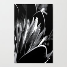 Just Grow Canvas Print