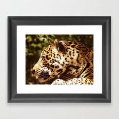 Jaguar In September Framed Art Print