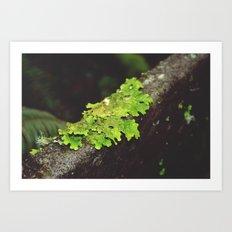 Lurking Lichen Art Print