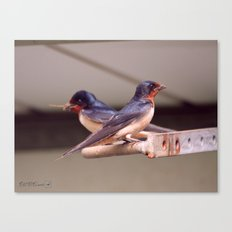 Barn Swallows With Nest Materials Canvas Print