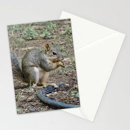 Squirrelly Stationery Cards