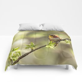Male Rufous Hummingbird on a Branch Comforters