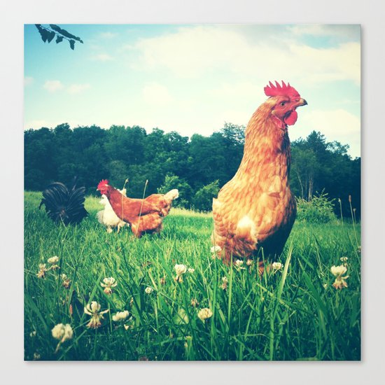 The Life of a Chicken Canvas Print