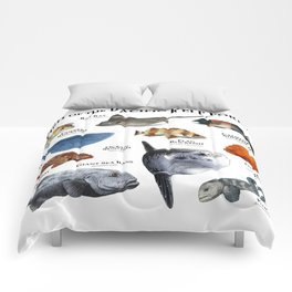 Fish of the Pacific Kelp Forest Comforters