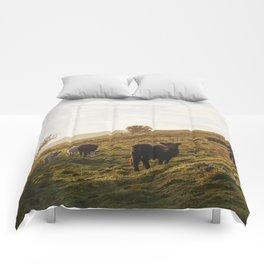 Cattle grazing on mountainside. Derbyshire, UK. Comforters