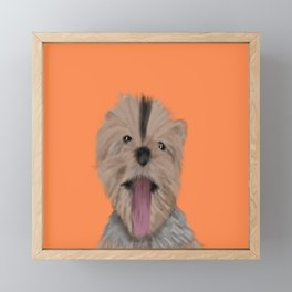 Luna The Yorkie With Her Tongue Hanging Out Framed Mini Art Print