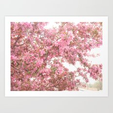 Shabby Chic Pink Blossom Spring Trees Nature Prints and Home Decor Art Print