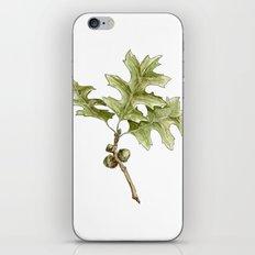 Pin Oak iPhone & iPod Skin