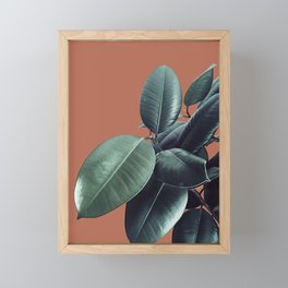 Ficus Elastica #17 #AutumnLeaf #foliage #decor #art #society6 Framed Mini Art Print