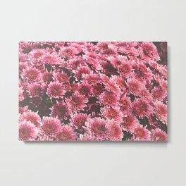 Chrysanthemum Autumn Flowers Photography Metal Print