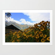 Daisies and Alps Art Print