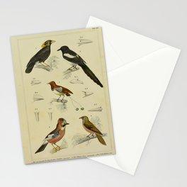 050 eulabes javanus pica communis garrulus glandarius buphaga africana paradisea regia caryocatactes guttata17 Stationery Cards