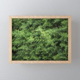 Pinheiro Framed Mini Art Print