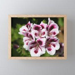 Purple Geraniums Flowers Framed Mini Art Print