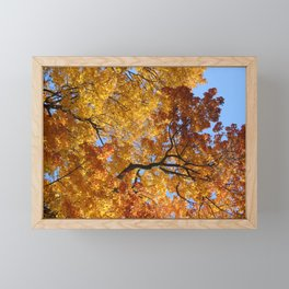 Autumn Maples Framed Mini Art Print