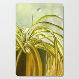 Chlorophytum, indoor potted plant, close up - image Cutting Board