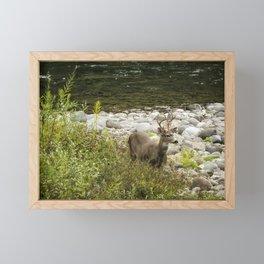 Handsome Deer on an Island No. 1 Framed Mini Art Print