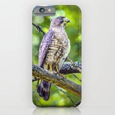 Broad wing Hawk iPhone 6s Slim Case