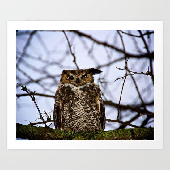 The Disgruntled Owl (Original shot 2012) Art Print