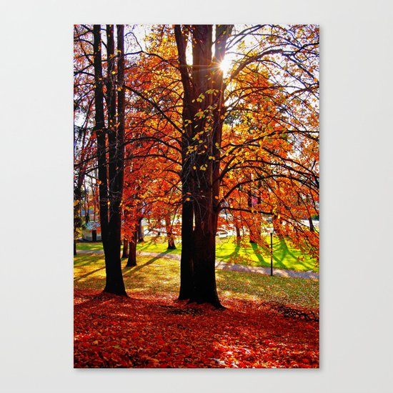 Autumn sunshine Canvas Print