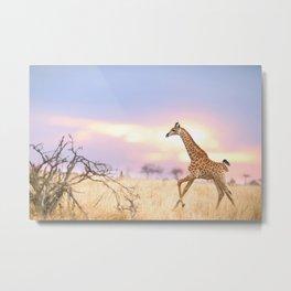 Giraffe photo Metal Print