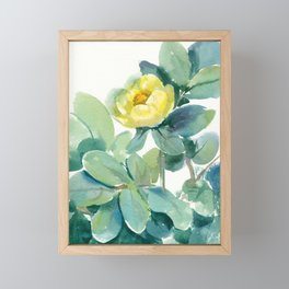 yellow tree peony, watercolor, sketch from nature Framed Mini Art Print