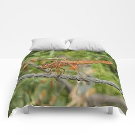 Female Red Skimmer Dragonfly Comforters