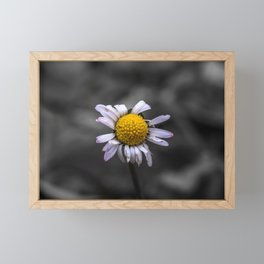 Almost naked daisy in black and white background Framed Mini Art Print