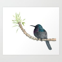 Watercolor Birds: Palestine Sunbird Art Print