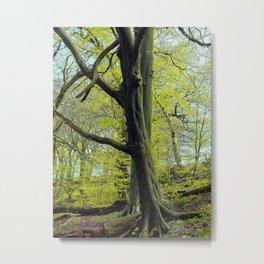 two - springtime Metal Print