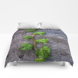 Ivy on Wood Wallpaper Comforters