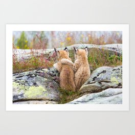 Lynx kittens - sister love Art Print