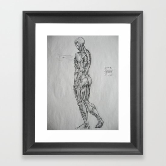 Muscle Anatomy II Framed Art Print