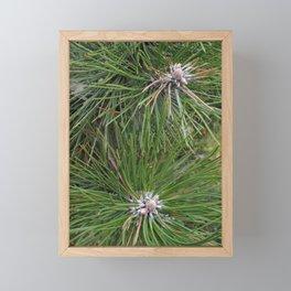Pine tree needles Framed Mini Art Print