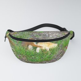 Squirrel 2 Fanny Pack