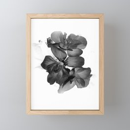 Black Geranium in White Framed Mini Art Print