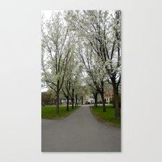Boston Trees Canvas Print
