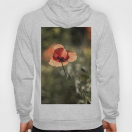 Enlightened Poppies at early backlight Hoody