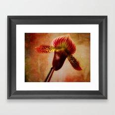 Ruby Lady Slipper Orchid Framed Art Print