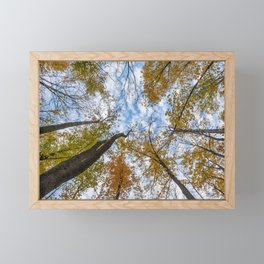 Look up ... way up! Framed Mini Art Print