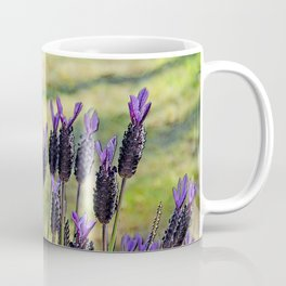SPANISH LAVENDER AND MOWED SHADOWS Coffee Mug