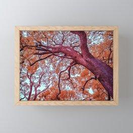 Infrared Oak Tree at Ueno Park, Tokyo, Japan Framed Mini Art Print