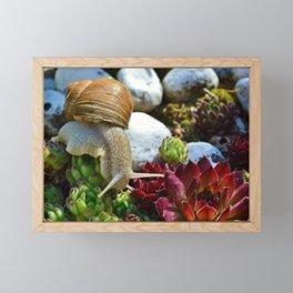 Snail Framed Mini Art Print