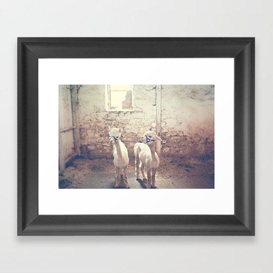 Young Alpacas  Framed Art Print