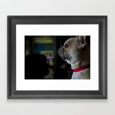 Sophie the French Bulldog Framed Art Print
