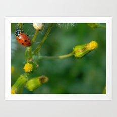 Lady Bug Dandelion Art Print